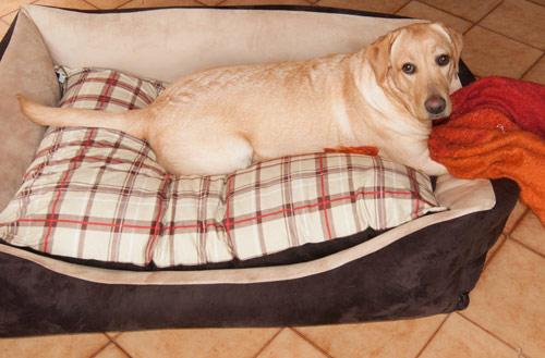 Divano per cane border collie sfoderabile arredo e corredo - Coprirete vestiletto ikea ...